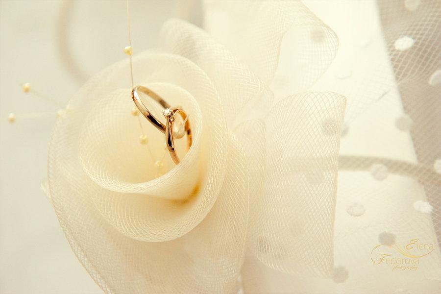 фотография обручальных колец