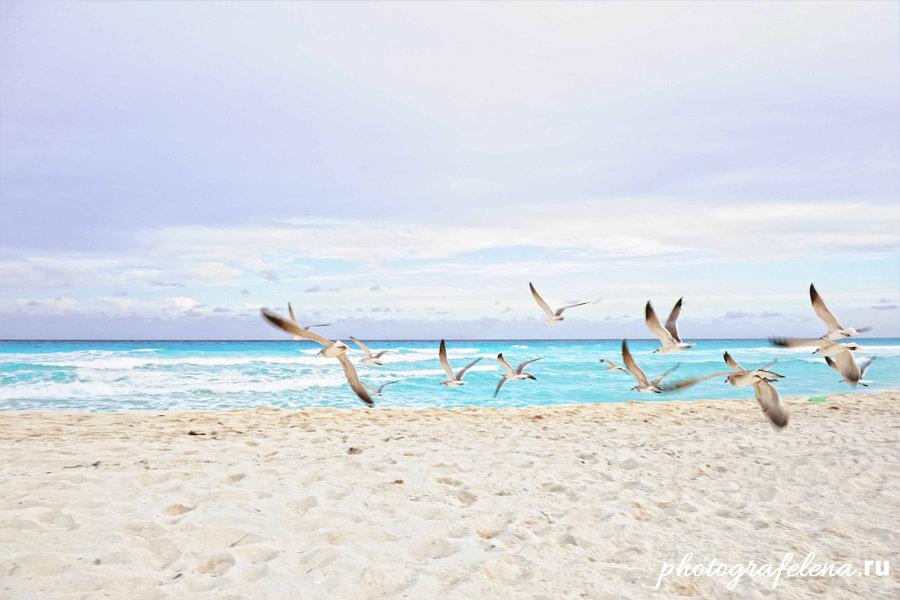 пляж дельфинес в канкун